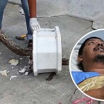 Thai man bitten on genitals by 9ft python while on toilet