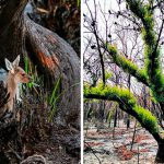 Life Is Slowly Returning To Scorched Australian Lands